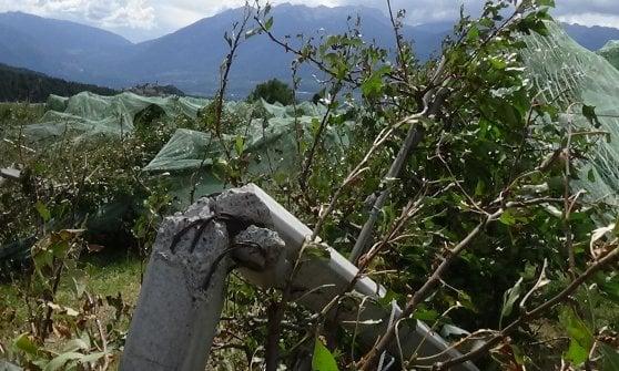 Trentino: grandine 'killer', in Val di Non mele distrutte e produzione dimezzata