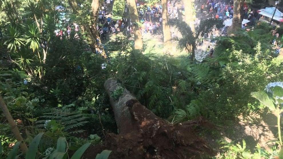 Portogallo, albero secolare cade su processione a Madeira e fa strage tra i fedeli