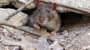 """""""Questa è la fabbrica dei topi""""Un intero quartiere assediato"""