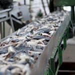 Pesce lavorato: importiamo dieci volte più di quanto esportiamo