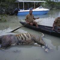 India, monsone devasta il Nord: strage di animali protetti nel Kaziranga National Park