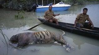 India, allagamenti da monsone:è strage di animali protetti nel Kaziranga National Park