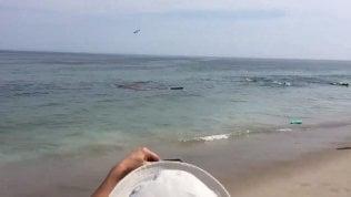 Squalo bianco vicino ai surfisti: fuga disperata dall'acqua