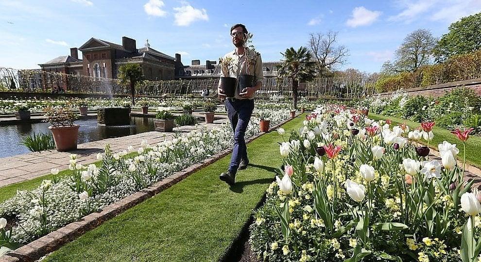 Foto . Londra, un giardino con i fiori cari a Lady D