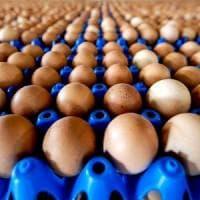 Uova contaminate, sequestrati 2 allevamenti in Campania. Nas bloccano stabilimento