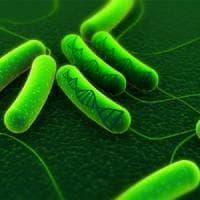 Helicobacter: ecco perché può causare il cancro dello stomaco