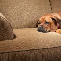 Cani, topi e pappagalli: anche gli animali si annoiano