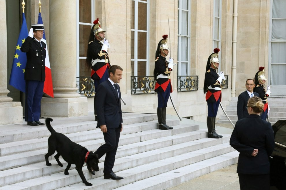 Francia, c'è un nuovo inquilino all'Eliseo: il labrador Nemo adottato dal presidente Macron