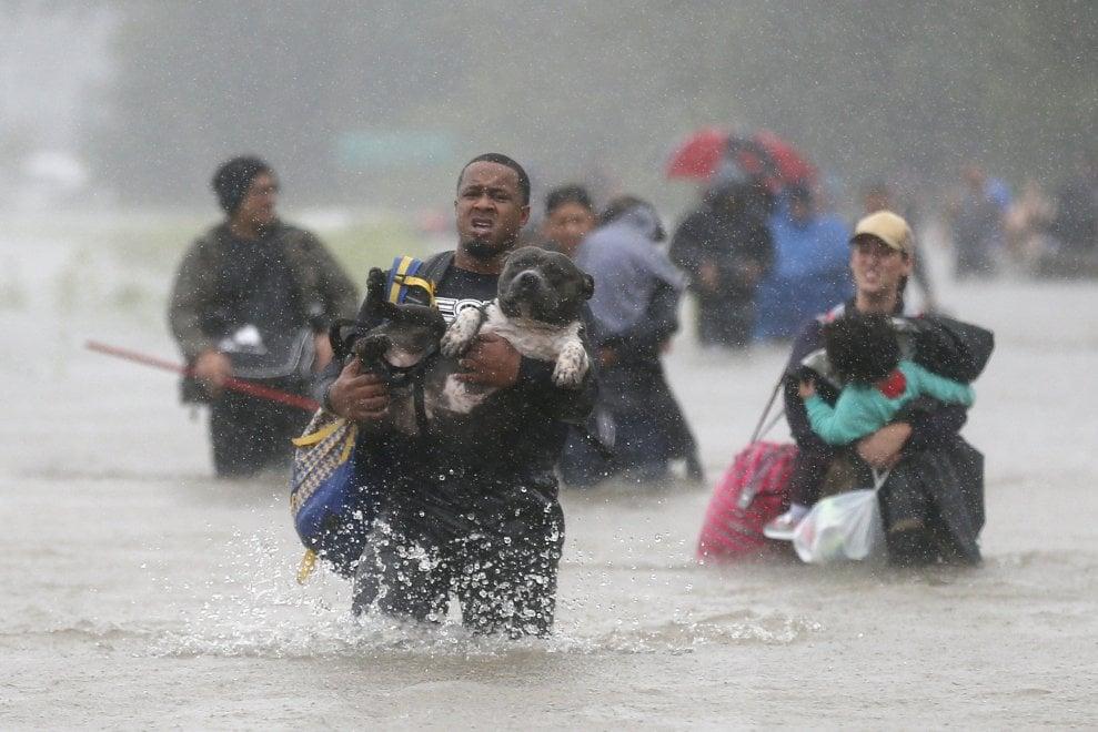 Texas, quando l'amicizia sfida l'uragano Harvey: i cani messi in salvo