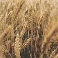 Le più comuni allergie alimentari