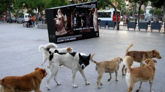 Lav: meno cani nei canili, ma randagismo ancora grave nel Sud