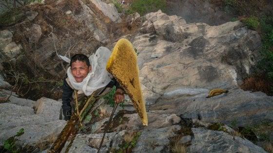 Sulle vette dell'Himalaya con l'ultimo cacciatore di miele allucinogeno