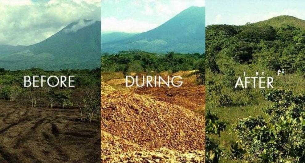 Così grazie alle arance da un terreno morto è nata una foresta