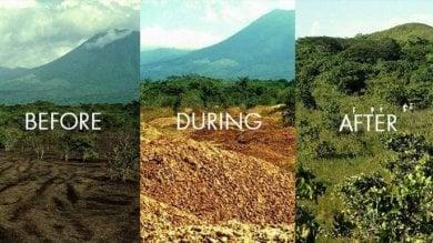 Il miracolo delle arance  abbandonate in Costarica