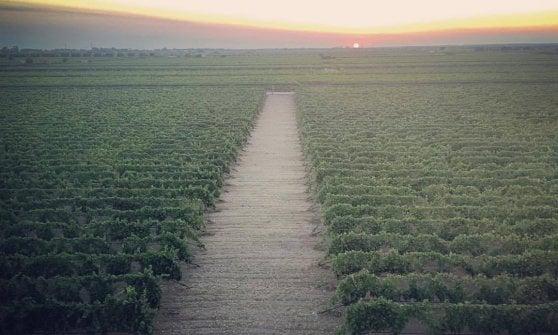 Dal vino sfuso alla cantina del Papa, la straordinaria parabola del Primitivo di Erminio Campa