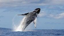 Aumentano gli avvistamenti di cetacei e altre specie nel Mar Ligure