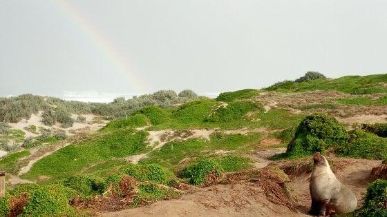 Sulle orme dei pionieri: Adelaide tra miniere e vino, passando per l'Isola dei Canguri e i Monti Flinders