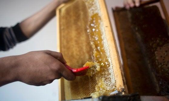 Il miele migliore d'Italia è di timo ed arriva da Siracusa