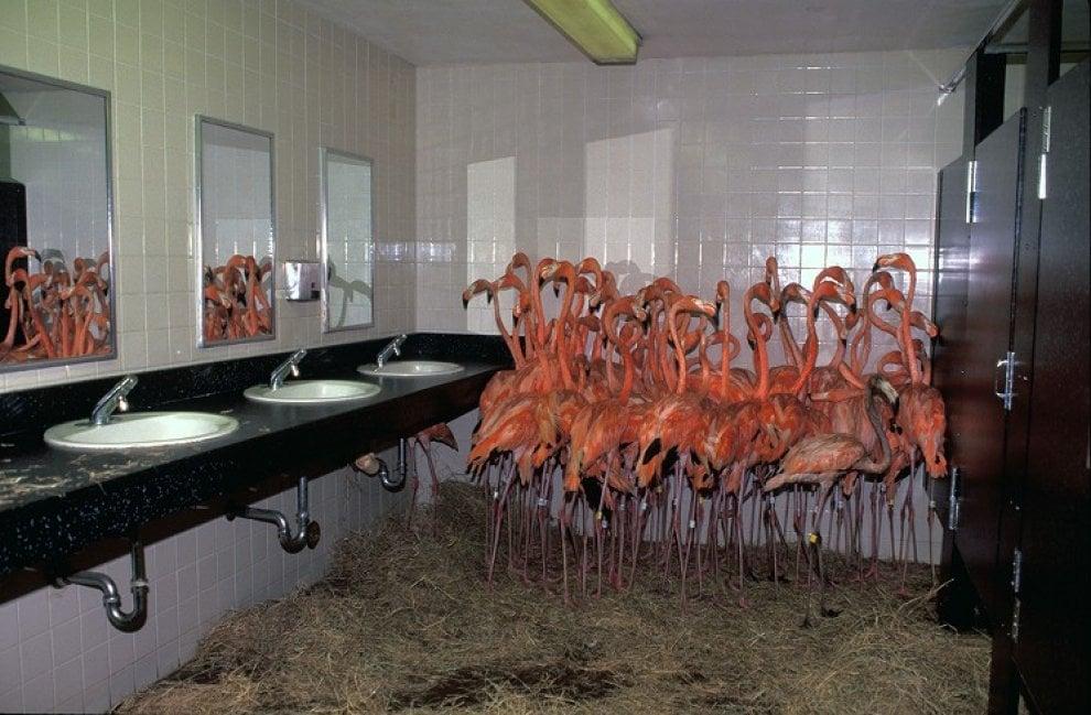 Miami, l'uragano Irma è alle porte:  lo zoo mette al riparo gli animali