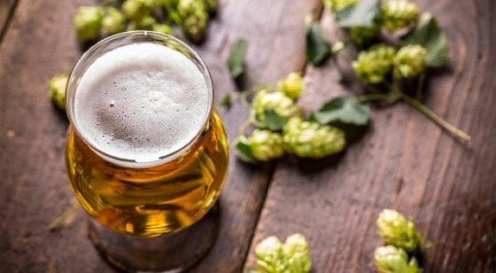 Ma la birra ha un terroir  come il vino? 10 bottiglie    per un legame da scoprire
