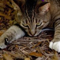 Florida, risparmiata la casa di Hemingway: gatti in salvo grazie alla manager