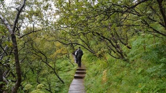 Clima, in Islanda le betulle non sono più nane. L'esperto: ''Somiglierà presto alla Scozia''
