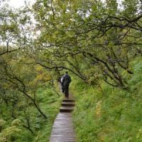 Clima, in Islanda le betulle non sono più nane. L'esperto: ''Somiglierà presto alla...