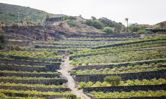 Tra vigne, muretti a secco e vento, Pantelleria riscrive il suo futuro