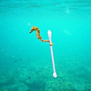 """Amitav Ghosh: """"Noi, carnefici incoscienti del pianeta"""""""