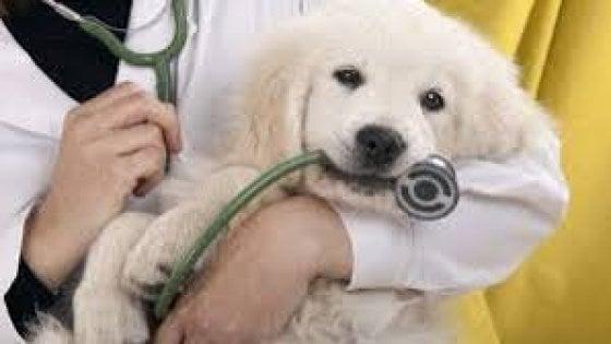 Cani & gatti, attenti alla salute