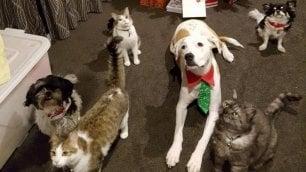 Cani & gatti attenti alla salute