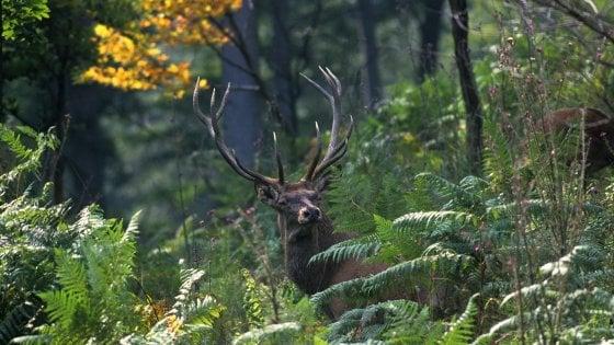 """Nei Parchi del Trentino, per il """"bramito"""" dei cervi"""