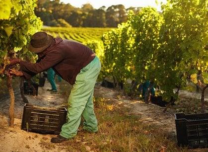 Formaggi, olio, pomodori e vino: il lavoro degli immigrati che mantiene vive le nostre campagne