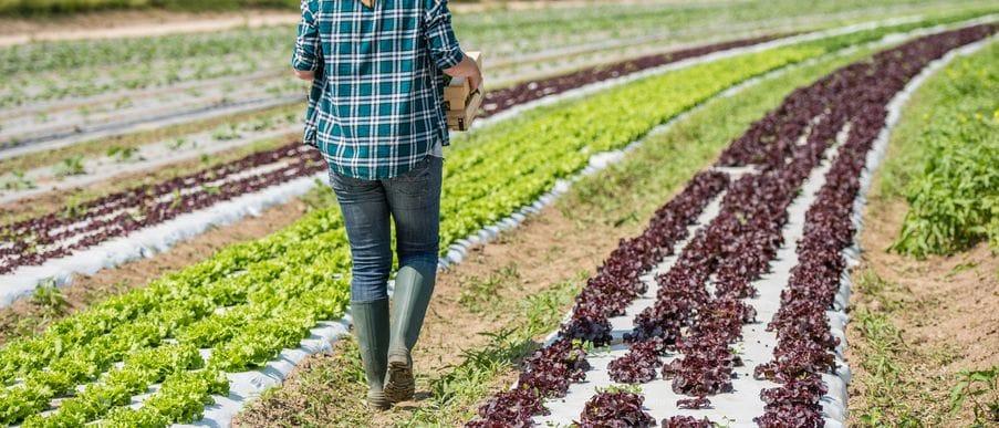 Il cibo biologico è ormai un trend di massa