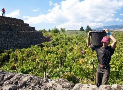 In cucina con il vulcano: il paradiso gastronomico che circonda l'Etna