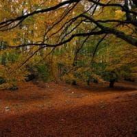 Arrivederci estate, il 22 settembre l'equinozio d'autunno