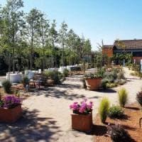 Healing garden: l'Alzheimer si cura in giardino
