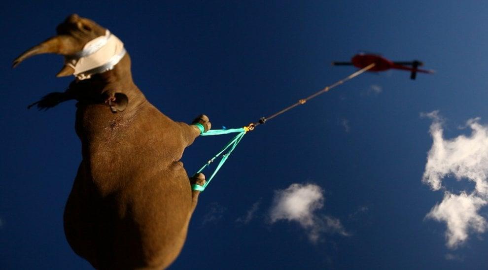 Giornata mondiale del rinoceronte, specie a rischio bracconaggio