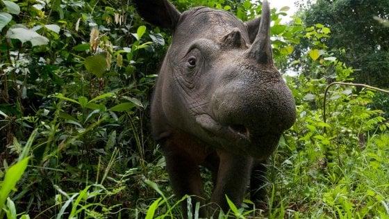 Giornata del rinoceronte, il bracconaggio è la minaccia numero uno