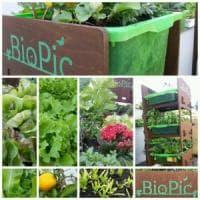 BioPic, la sturtup italiana che porta il verde sui tetti in Danimarca