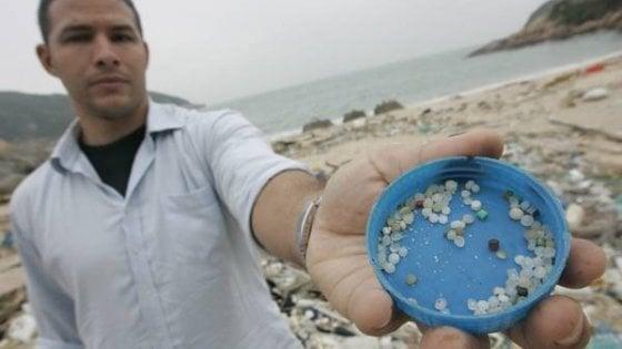 Le particelle di plastica possono intaccare il cervello dei pesci