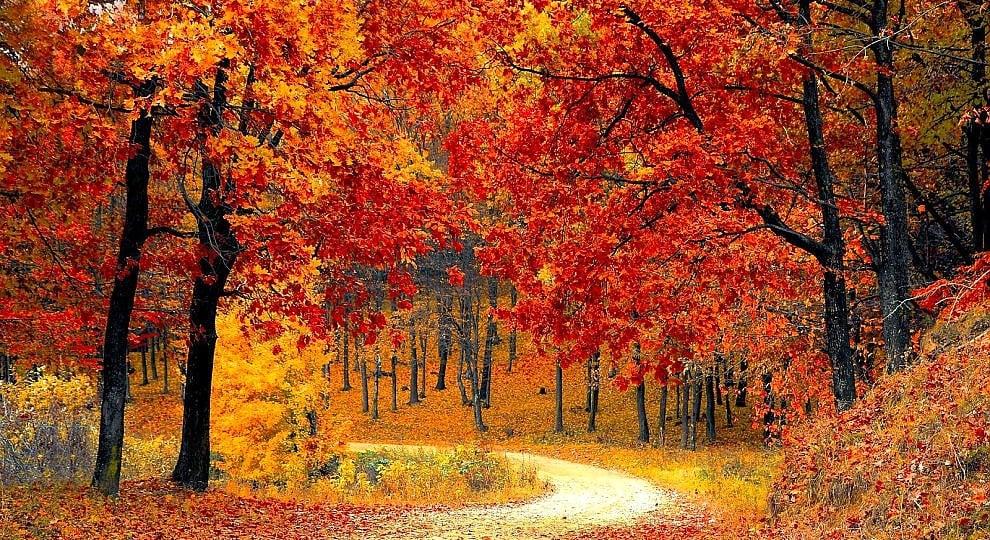 Il foliage di casa nostra -   ft