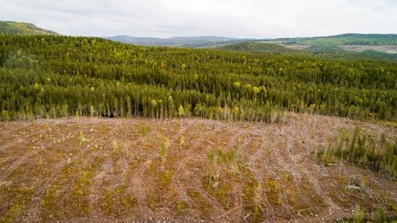 """Greenpeace: """"La foresta boreale si sta esaurendo per colpa dei fazzoletti"""""""