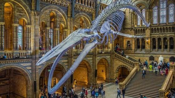 Finora i musei hanno conservato il mondo, ora si tratta di salvarlo