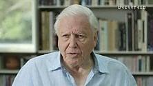 """Sir David Attenborough: """"Quel piccolo di albatros che trova solo plastica nel becco materno"""""""