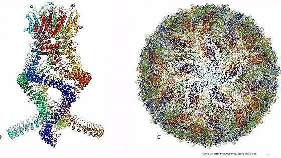 Il Nobel per la Chimica a Dubochet, Frank e Henderson