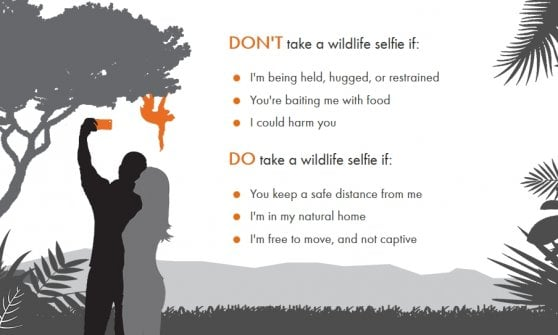 """Gli ambientalisti ai social: """"Effetto Instagram: triplicati i selfie con gli animali selvatici"""""""