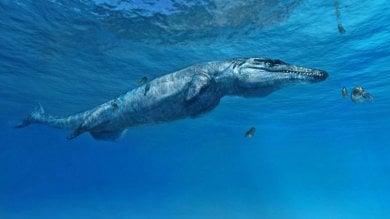 Ecco il 'Mostro di Melksham', il coccodrillo preistorico che abitava i mari d'Europa