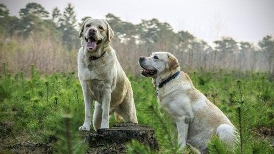 Cani, ecco come comunicano