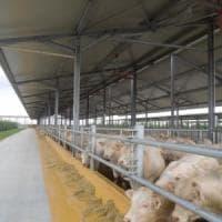 Nasce la filiera della carne green: così la bistecca diventa ecosostenibile